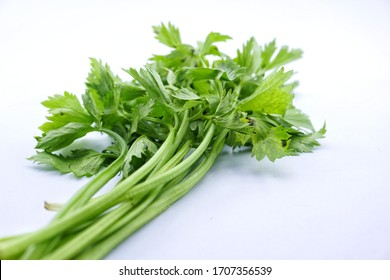 Celery (Apium graveolens) is a leaf vegetable and medicinal plant commonly used as a spice in cooking