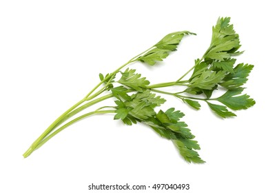celery, parsley bunch on white background