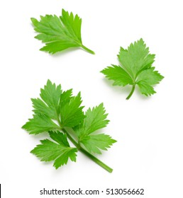 Celery or parsley leaf isolated on white background. Top view.