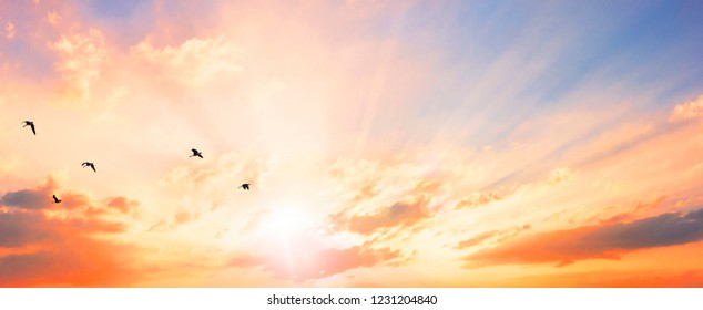 Celestial World concept:  Flying bird at sunset sky background