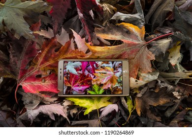 cell phone with picture of autumn leaves on the screen