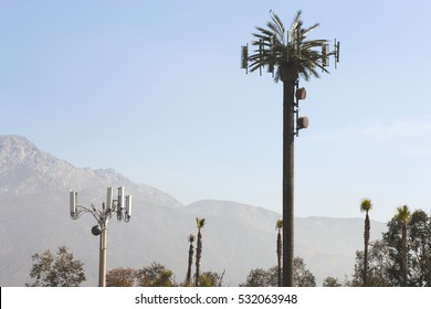 Cell phone tower disguised as a palm tree in Southern California.