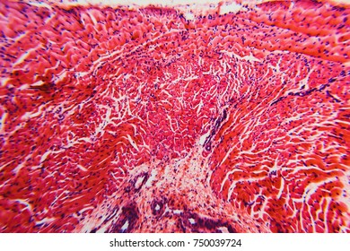 Cell- science background. Esophagus of the dog- cross section