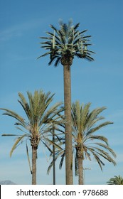 Cell tower disguised as palm tree