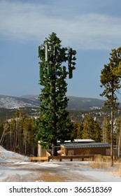 Cell Tower Disguised as a Tree in Winter