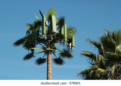 Cell Tower Fan Palm