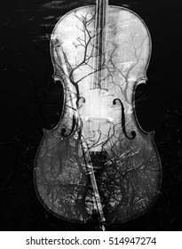 Cello with an artistic overlay of black and white branches.