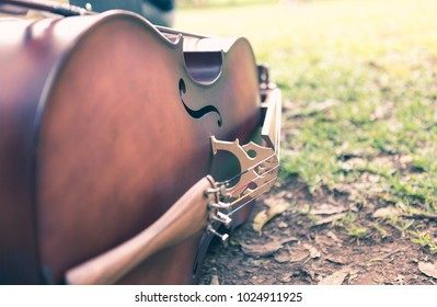 Cello lying on the grass of a public park.