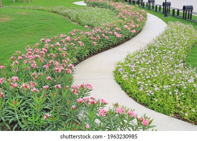 Cement path walkway with Oleander rose bay and Coromandel blooming flower beside in the garden
