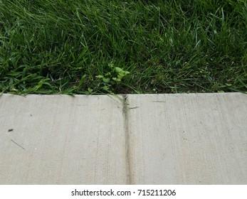 cement sidewalk with grass