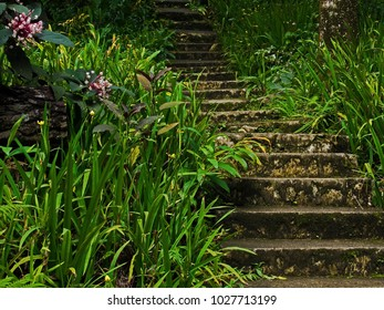 Cement stairway through tropical foliage leading upwards into shadows