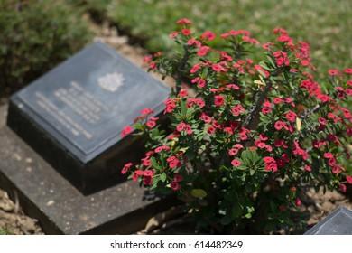 Cemetery Ground