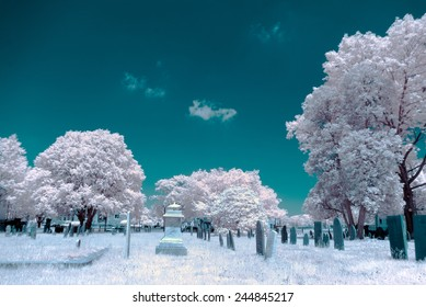 A cemetery shot in infrared, shows fantastical colors from seeing how light reflects in light that humans can't see.