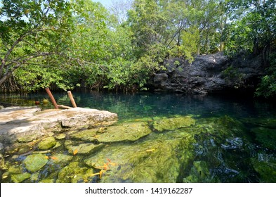 Cenote Cristalino near Playa del Carmen in the Quintana Roo, Mexico