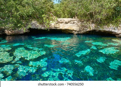 Cenote in Riviera Maya of Mayan Mexico sinkhole exposing groundwater