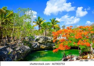 Cenote Tortuga, Coba, Yucatan, Mexico