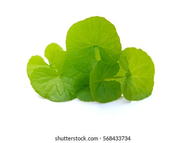Centella Asiatic Pennywort,