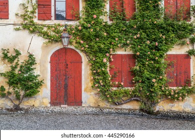 Centenary rose plant climbs on a dependence house with rust colored shutters, Villa Barbaro, Italy, painterly effect