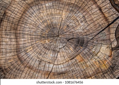 Center close-up of a plum tree log with cracks and annual rings.