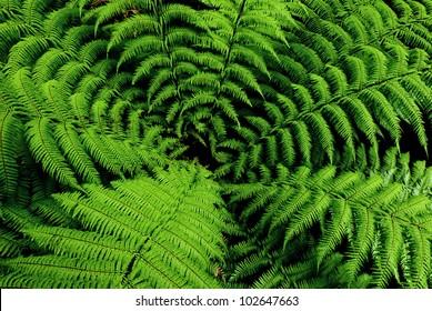 Center of fern tree in native bush, New Zealand
