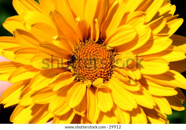 center of the flower