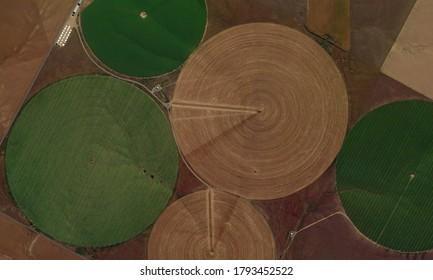 Center pivot irrigation system, looking down aerial view from above, circular fields and food safety