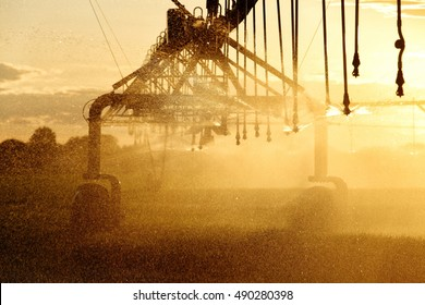 A center pivot sprinkler watering a wheat field at sunset.