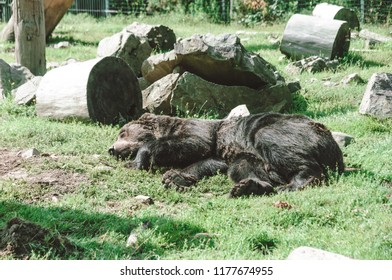 Center for the restoration of bears. Carpathian mountains. Summe