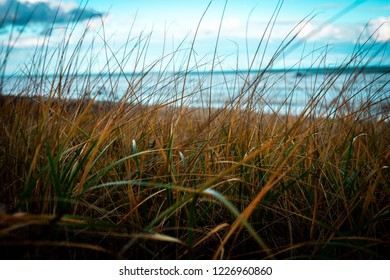 A center shallow focused shot of sea grass with the ocean out of focus in the background.