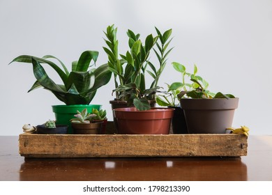 Centered houseplants inside a rustic wooden box, on top of a wooden table. Plants such as ZZ plant (Zamioculcas), peperomia, maranta, cactus, succulents, fittonia and sansevieria. Minimalist concept.