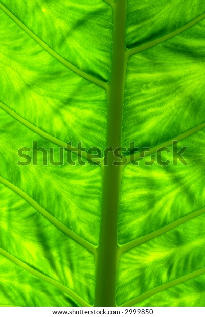 Central abstract of large tropical green leaf