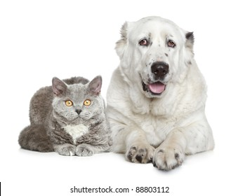 Central Asian Shepherd Dog and beautiful cat lying on a white background