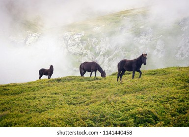 Central Balkan national park in Bulgaria animals