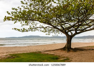 Central Beach of Itapema, in the background view of the city of Bombinhas, under shade of a tree, Santa Catarina