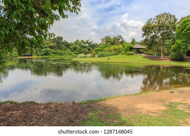 Central Catchment Nature Reserve MacRitchie of Singapore town, Singapore.