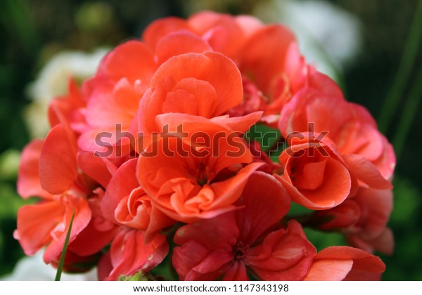 Central detail of a red bouquet flowers