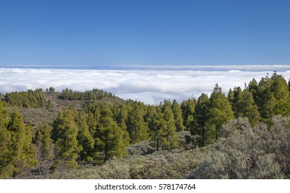 central Gran Canaria in January,  Pozo de Las Nieves - Santa Lucia de Tirajana route, area around Cruz del Socorro, layer of clouds seen from above (sea of clouds)