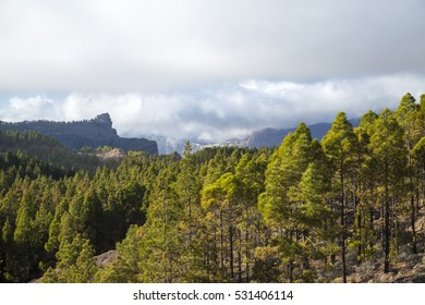 Central Gran Canaria, protected landscape of Roque Nublo