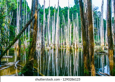 In the central mountainous area of Taiwan, affected by an earthquake, a water pond was formed in this place. The trees soaked in the water died, but they still did not fall down, thus forming a specia