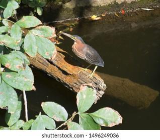 Central Ohio River Fishing Fowl