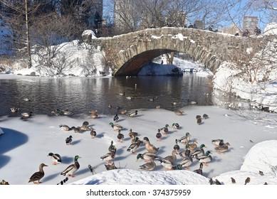 Central Park after a blizzard