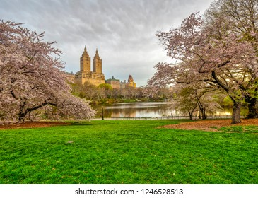 Central Park, Manhattan, New York City in spring with cherry trees in bloom