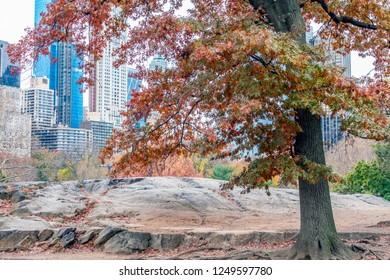 Central Park, Manhattan, New York City in  autumn