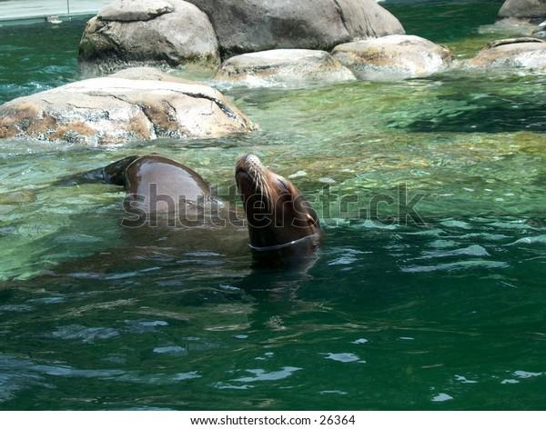 Central park seal