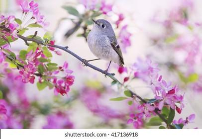 Central park spring bird.
