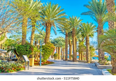 The central promenade of Eilat with shady palm gardens and scenic flower beds, Israel.