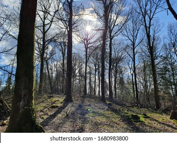 A central tree in the background wears the sun as a crown, granting an audience to the other trees in the clearing. They stand in file, rapt by the performance, allowing the sun to cast long shadows b