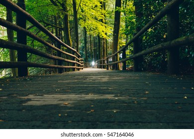 CENTRE PARCS, LONGLEAT, ENGLAND - AUGUST 8, 2016: Cyclist with Headlamp in beautiful long symmetrical, cycle wood path lane of trees in colored autumn, through deep woods