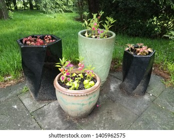 ceramic flower pots with green and pink and red flowers