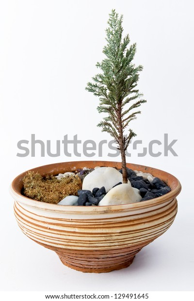 Ceramic pot with plant isolated on white background